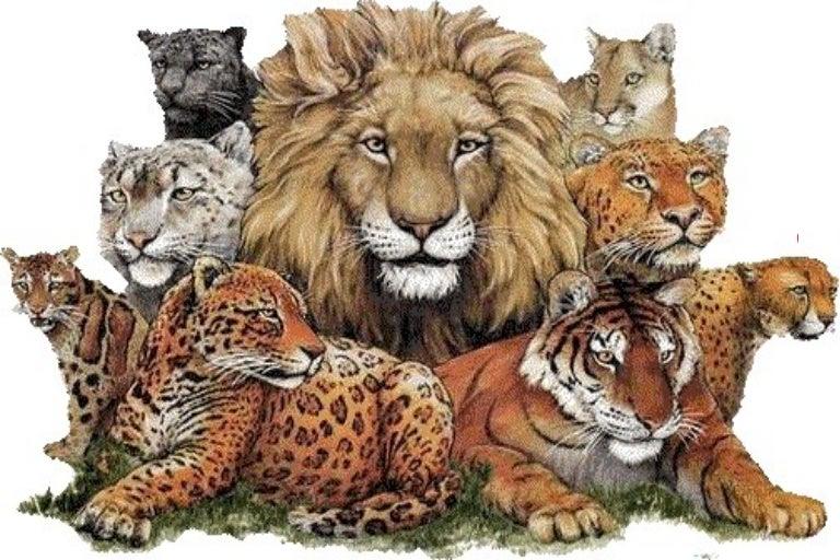 Wild Animals Blogppt