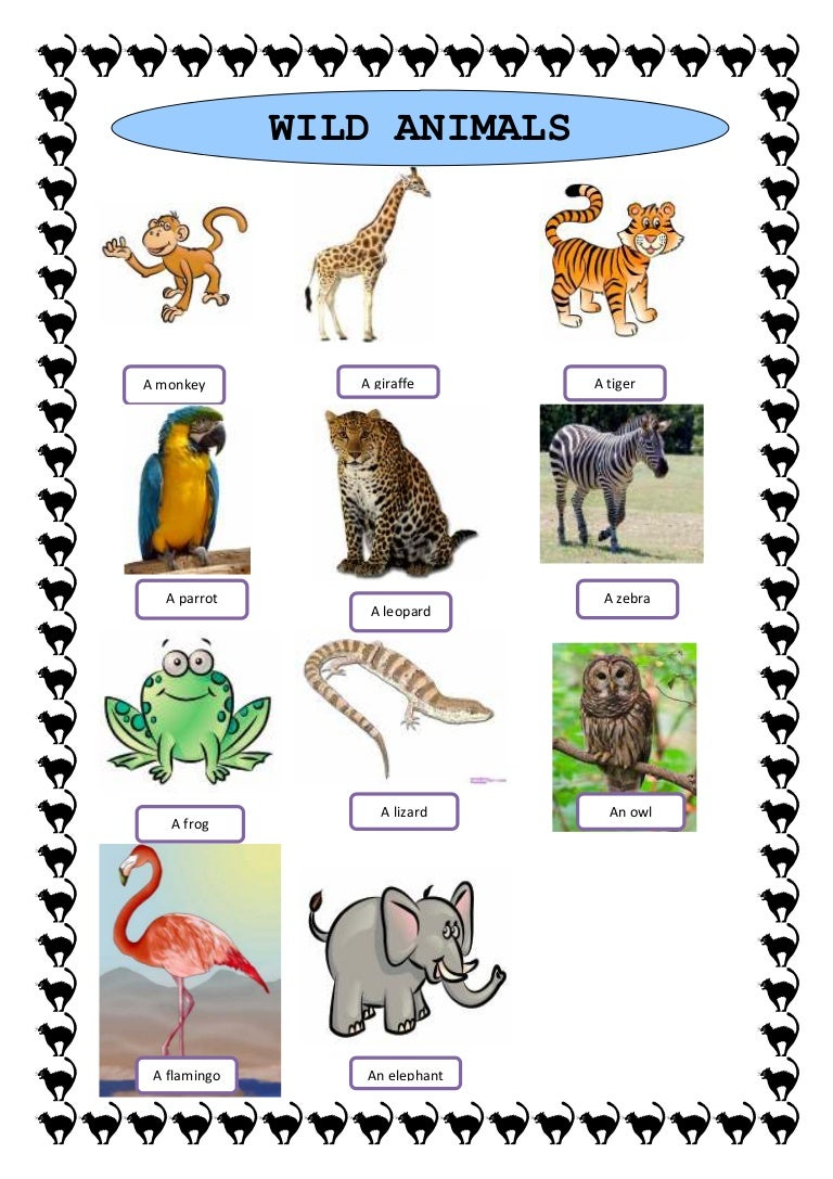 Wild Animals Study Sheet 20271653 on Spanish Word For Pets