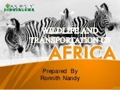 Wildlife and Transportation of Africa