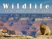 Wildlife: Grand Canyon National Park