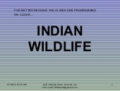 Wildlife in india_1_