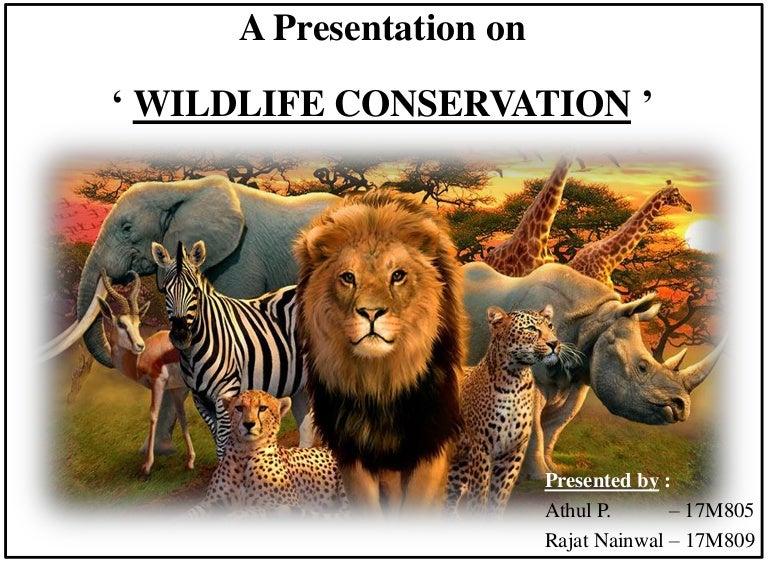 Essay on wild life conservation