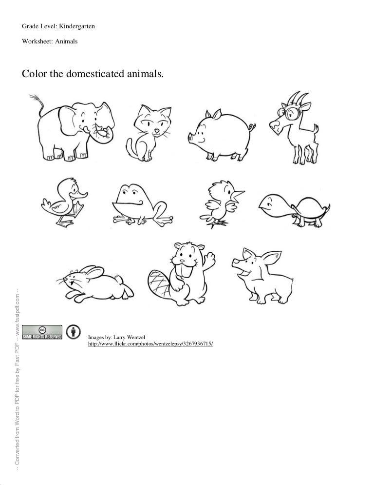 Worksheet For Kindergartners – Wild Animals Worksheets for Kindergarten