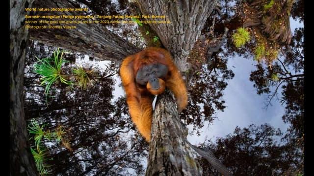 World Nature Photography Awards: Winners
