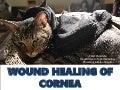 Wound healing of cornea