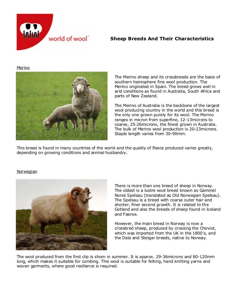 Wow Sheep Breeds And Their Characteristics 2008opt