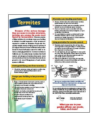 Termites Quick Tips Natural Pest Control
