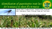 Identification of quantitative trait loci for resistance to shoot fly in maize