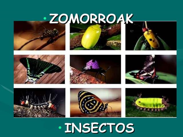 Zomorroak insectos