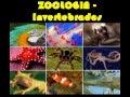 Aula de Zoologia - Invertebrados (Power Point)